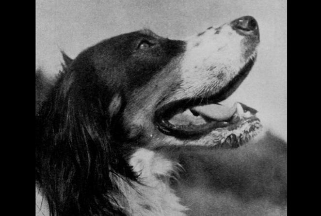 Landskonkurransen 1942-1949 (Foto: Roar Lund)
