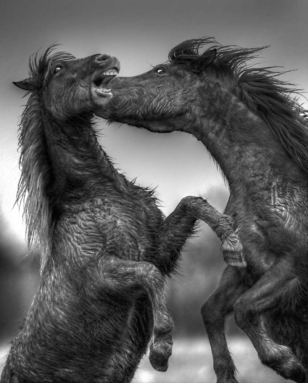 Crazy Horse--Roland Jensen