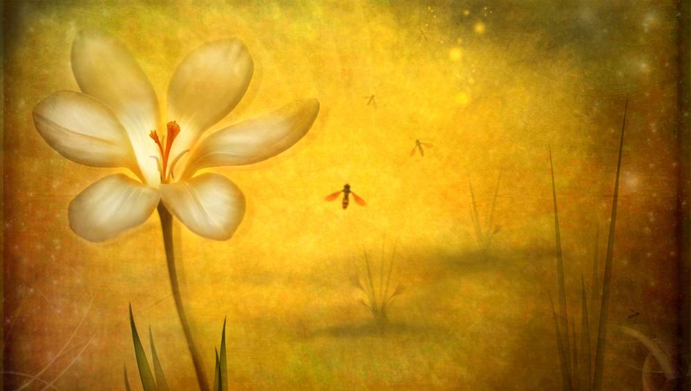 Summer--Lotte Christina Andersen
