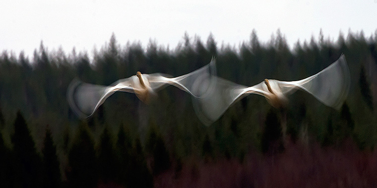 Foto: Seppo Rintala