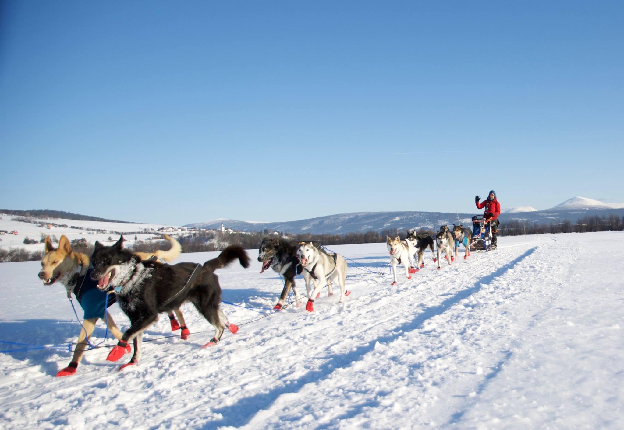 Femundløpet 2017 (foto: Stein Jarle Rønningen, Vingelen fotoklubb)