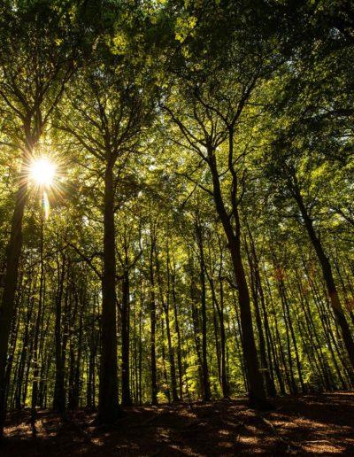 Oxholm skov (foto: Roar Engen)