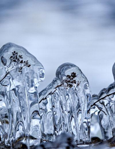 "Wenche Aune ""Ice flowers"""