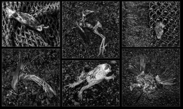 Medlemsprosjekt: Roald Synnevåg «Le Mort» (2015)