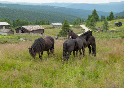 "Stine Marie Barsjø: ""Three horses"""
