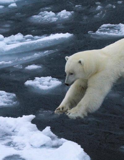 Jørgen Skaug: Polar Bear Jump