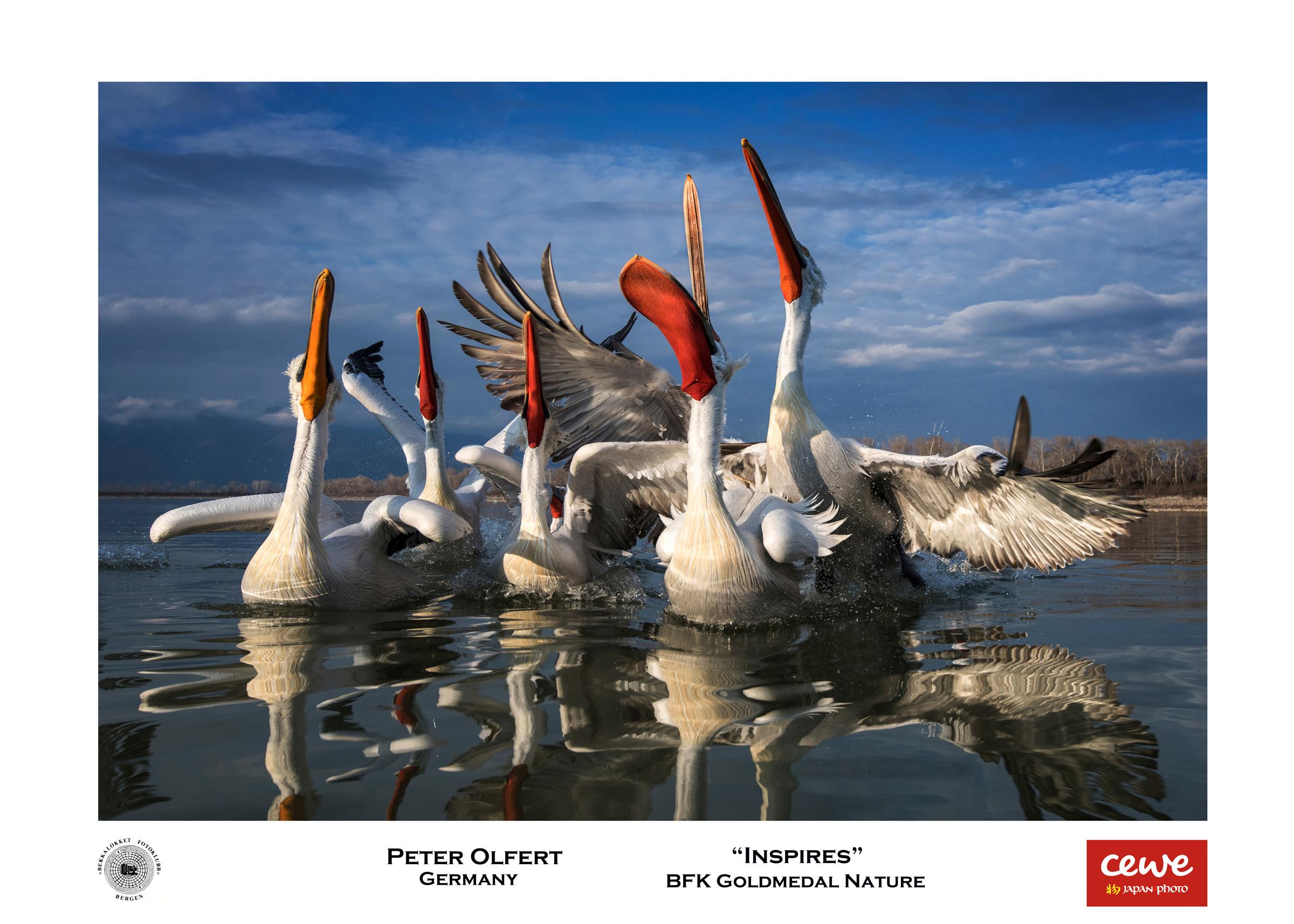 """BFK Gold nature: Peter Olfert """"Inspires"""""""