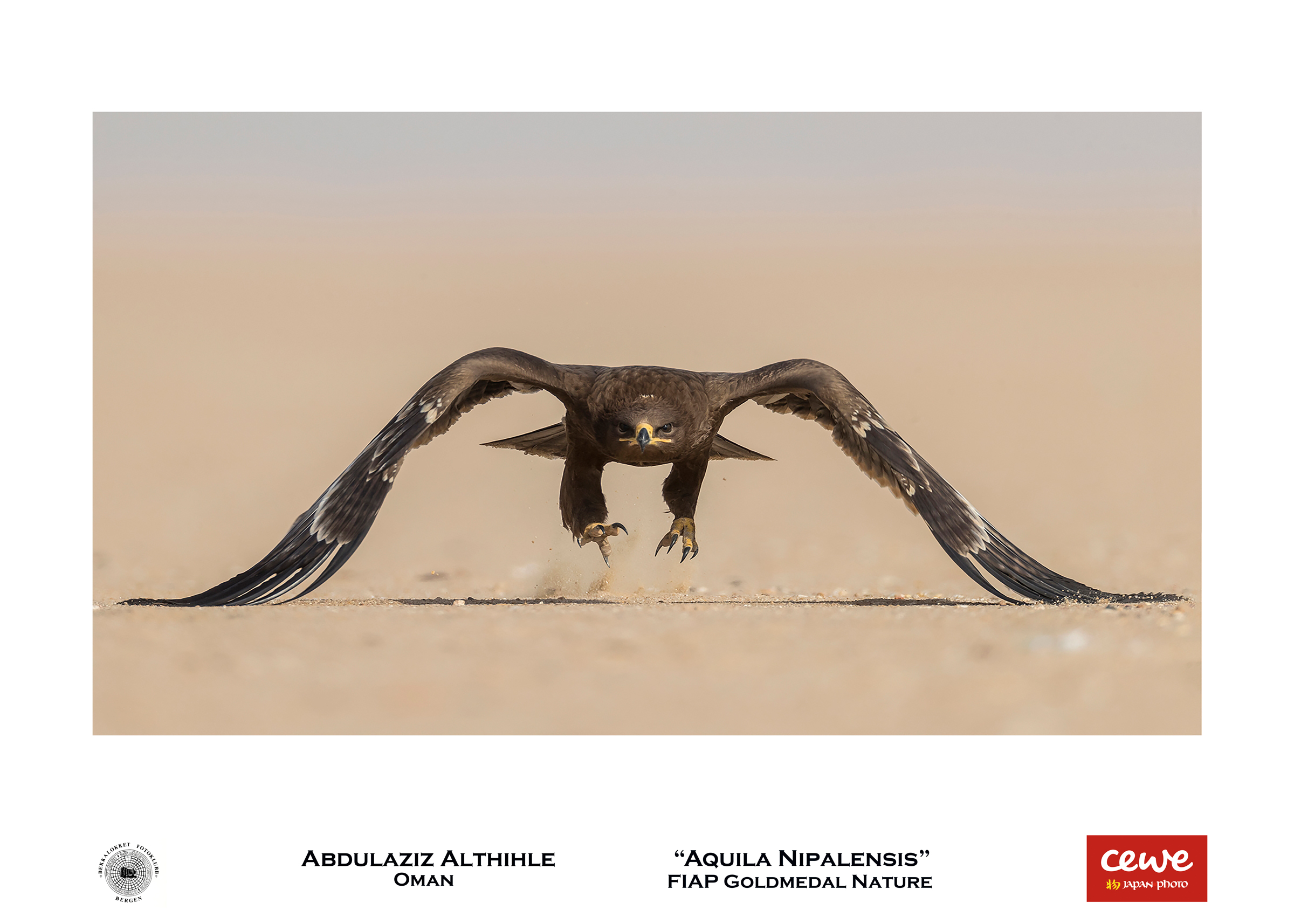 "FIAP Gold nature: Althihle Abdulaziz ""Aquila Nipalensis"""