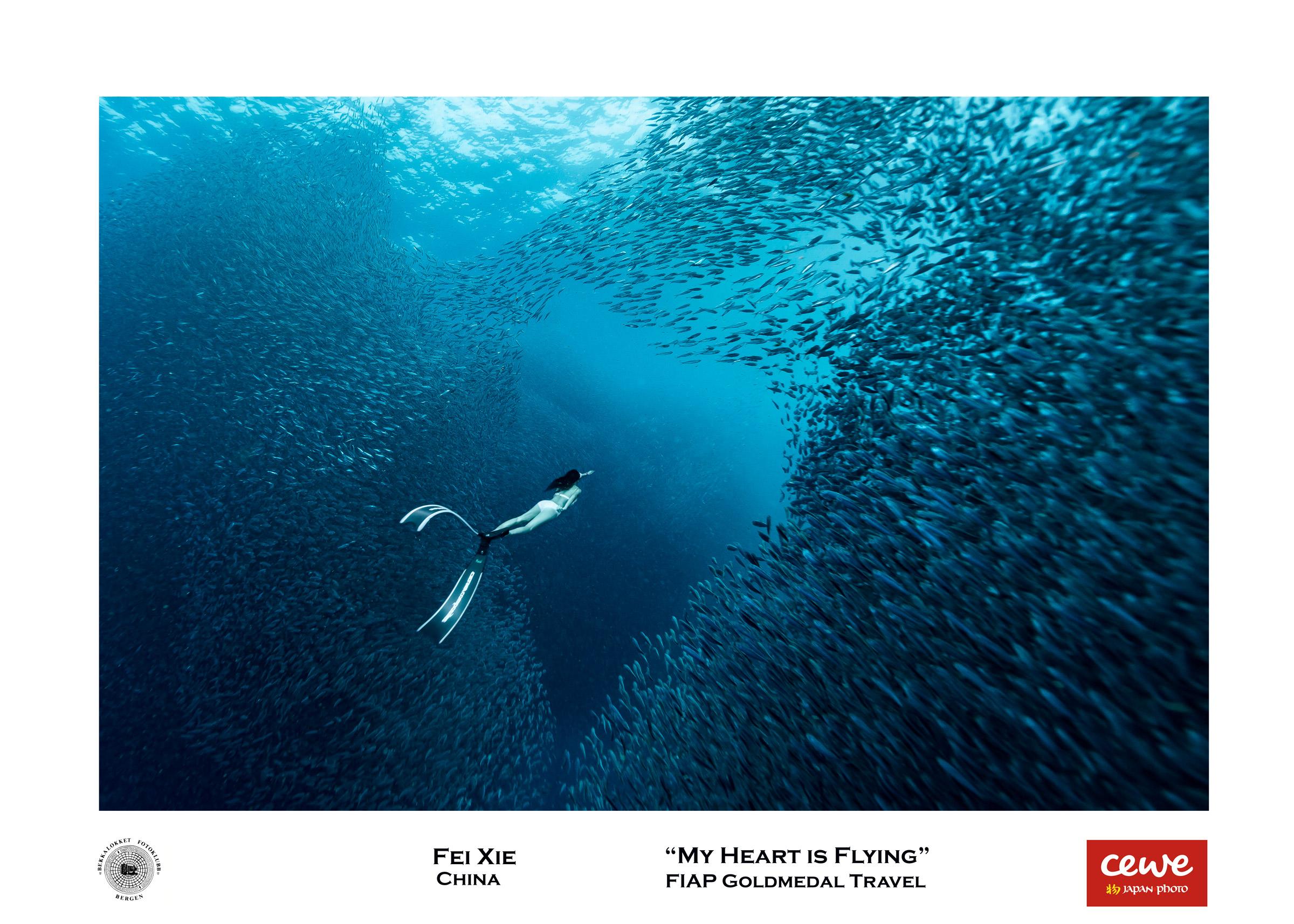 """FIAP Gold travel: Fei Xie """"My heart is flying"""""""