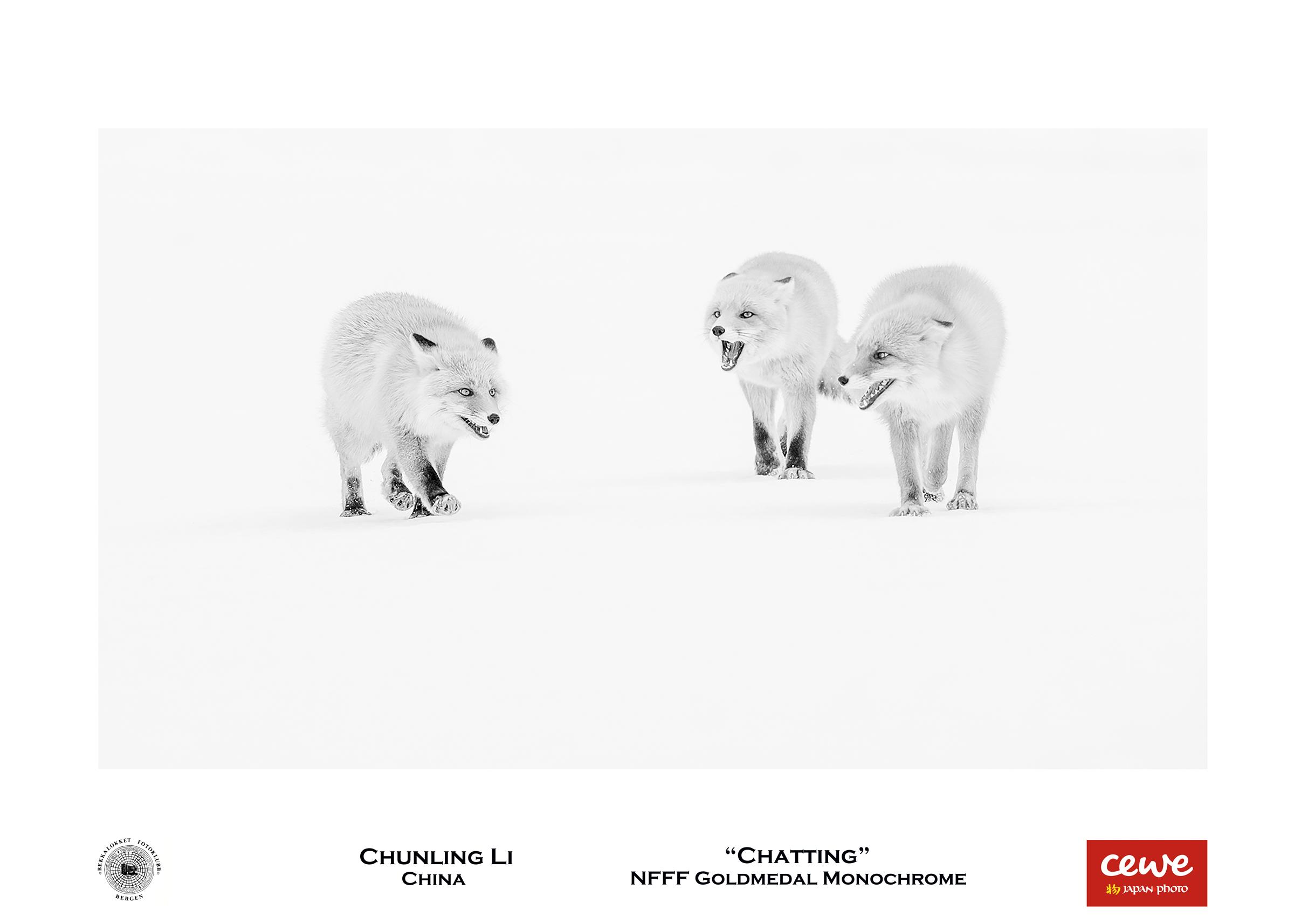 "NFFF Gold monochrome: Chunling Li ""Chatting"""