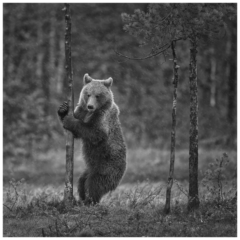 Foto: Atle Sveen