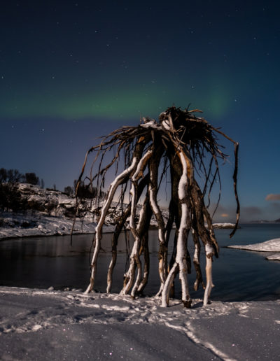 Nordlys over trollrota (Foto: Renate Jensen)