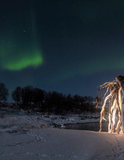 Rota på Gressholman (Foto: Christine Larssen)
