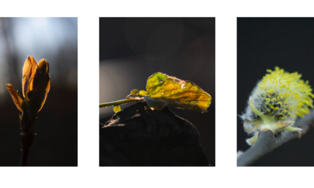 Fotosprint – alternativ til medlemsmøter