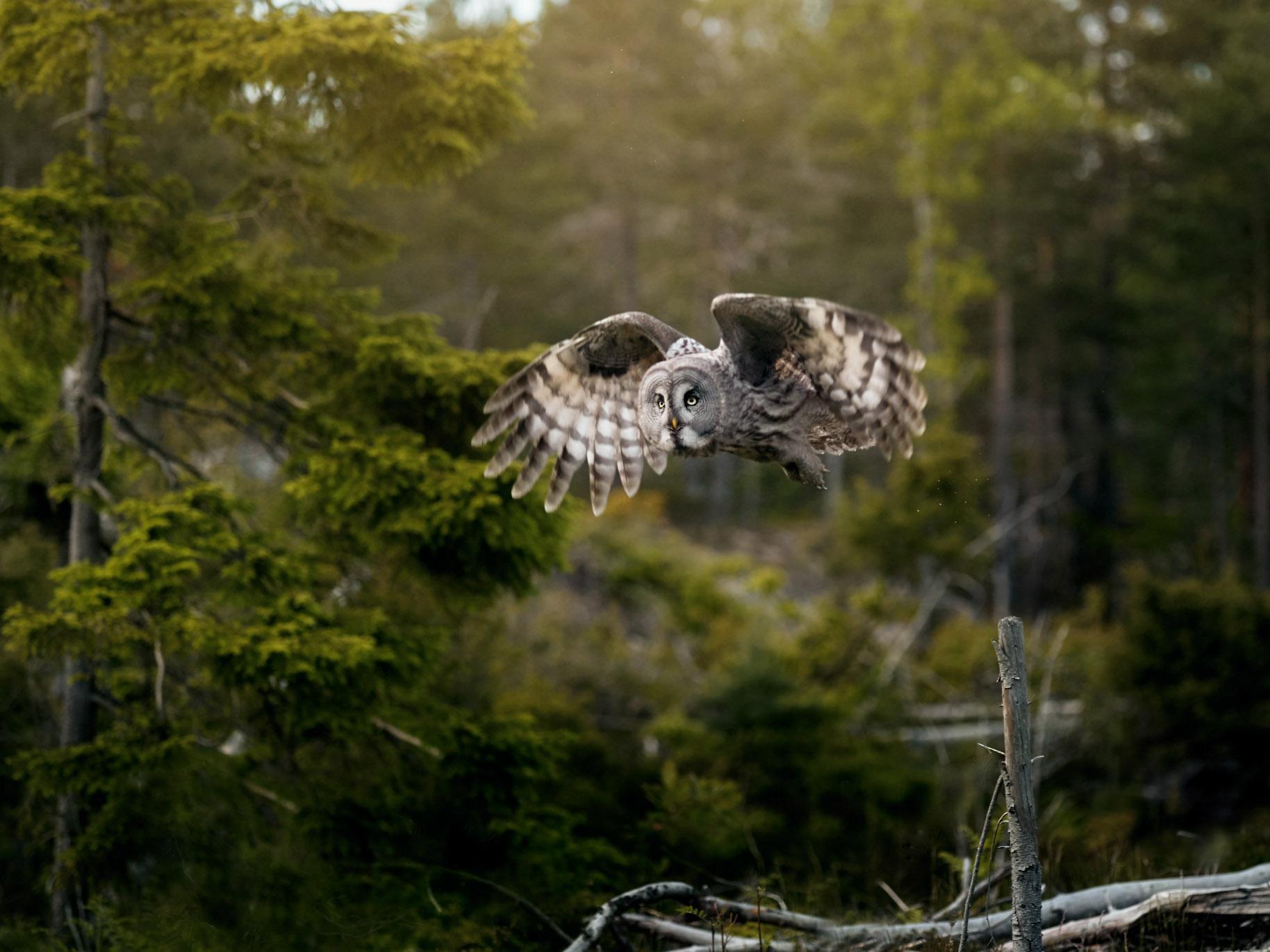 Foto: Tom Erik Smedal