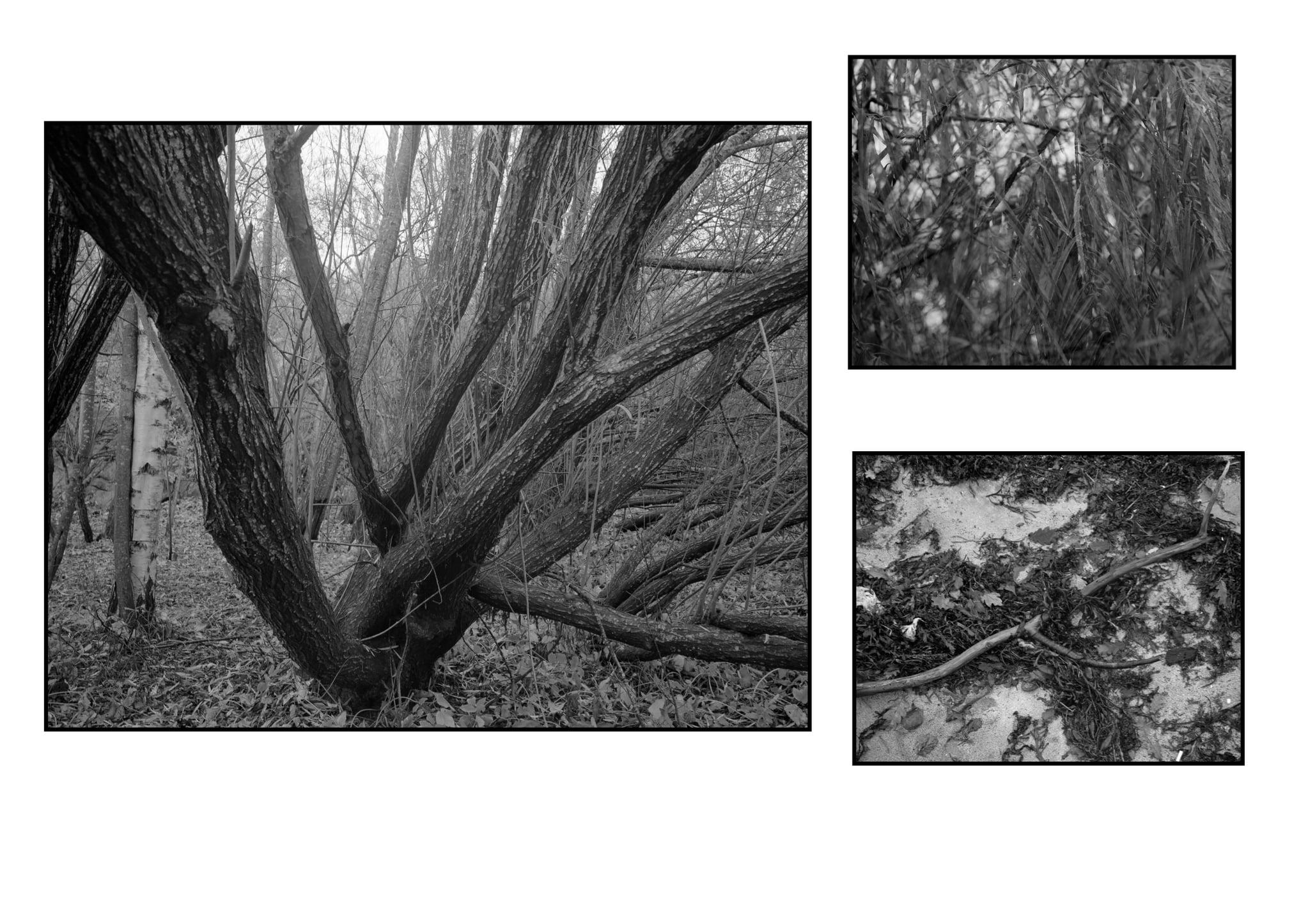 Triptych (Robin Bjerkhaug)