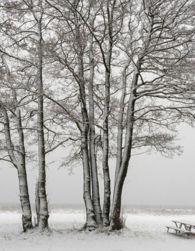 EFIAP-B Kari E. Espeland: Winter silence