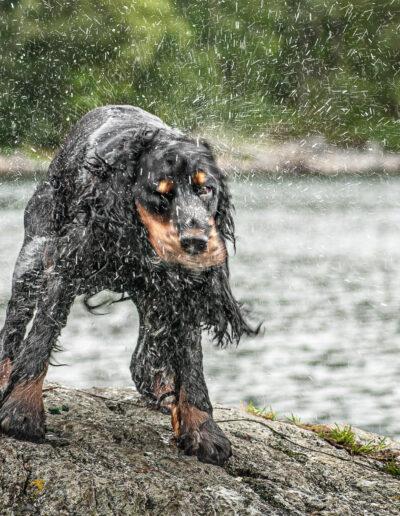 Arnold Hoddevik, Skodje: Just got wet