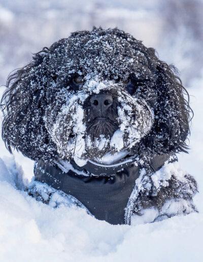 Lise Sørensen, TKK: I wish I was a polar dog