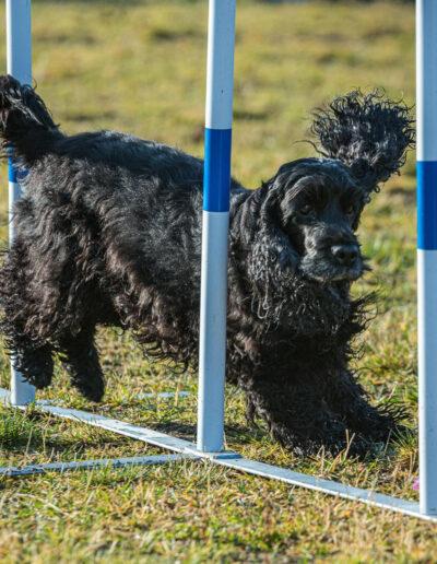 Siri Døsen, Harstad: Hund i aksjon
