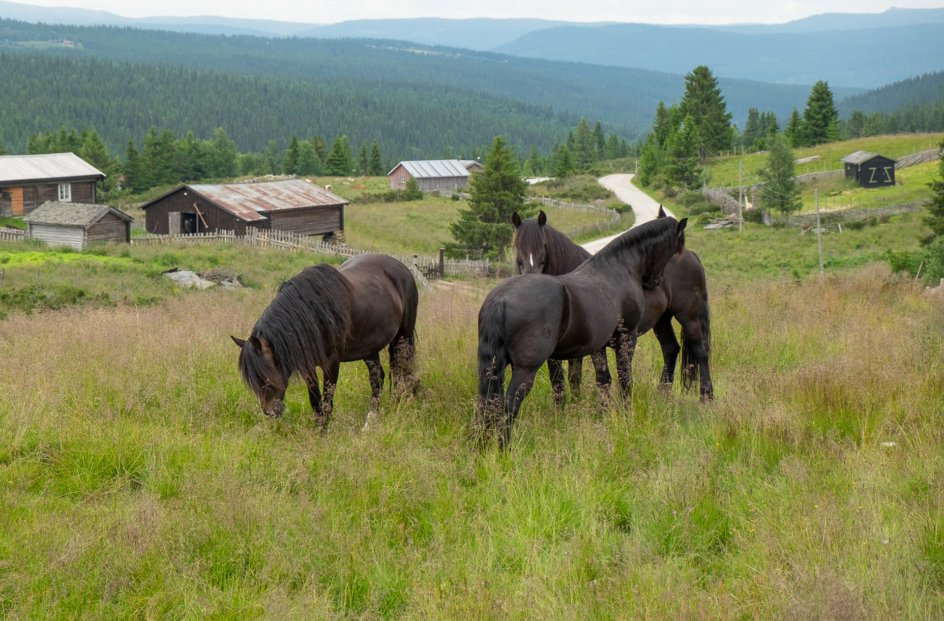 "Stine Marie Barsjø: ""Three horses"""