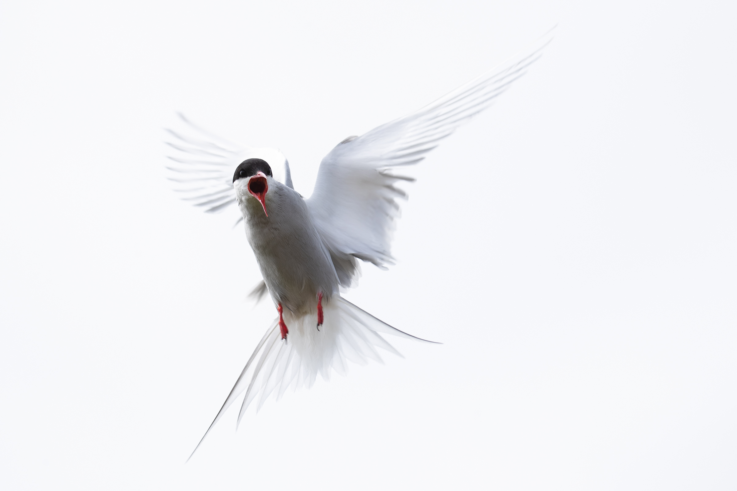 Tern (Nina Jonsson, Moss FK)