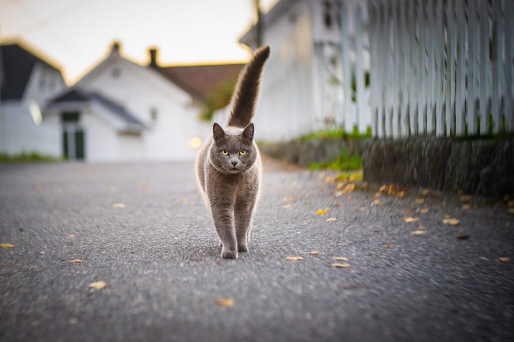 Katt i Narestø (Birgit Fostervold)