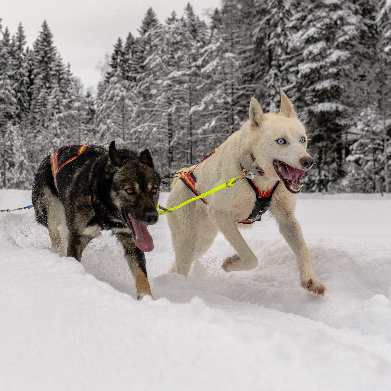 Asgeir Rølling, Drammen: Born to run
