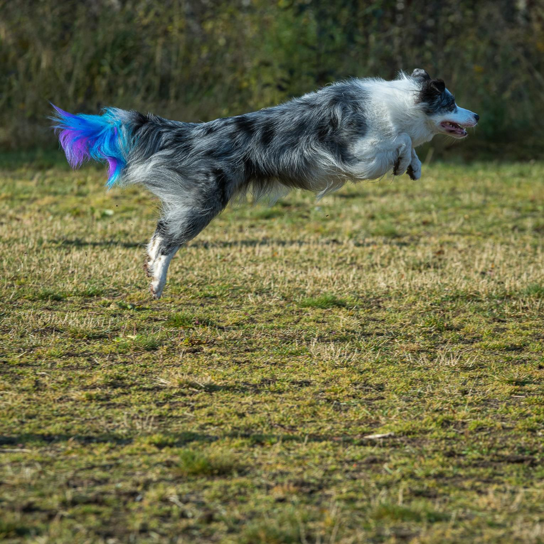 Siri Døsen, Harstad: Hund i lufta
