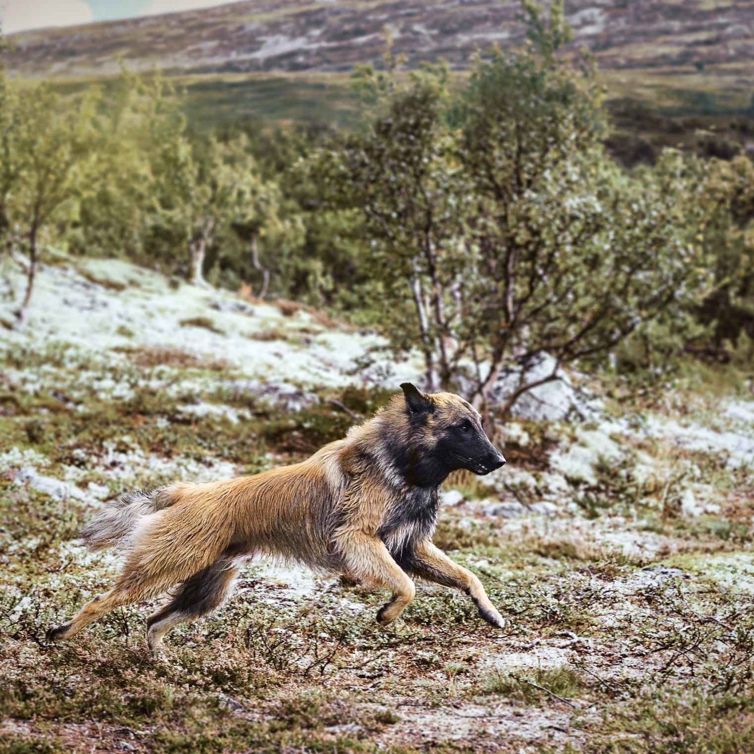 Synøve Johannessen, Drammen: Camouflage