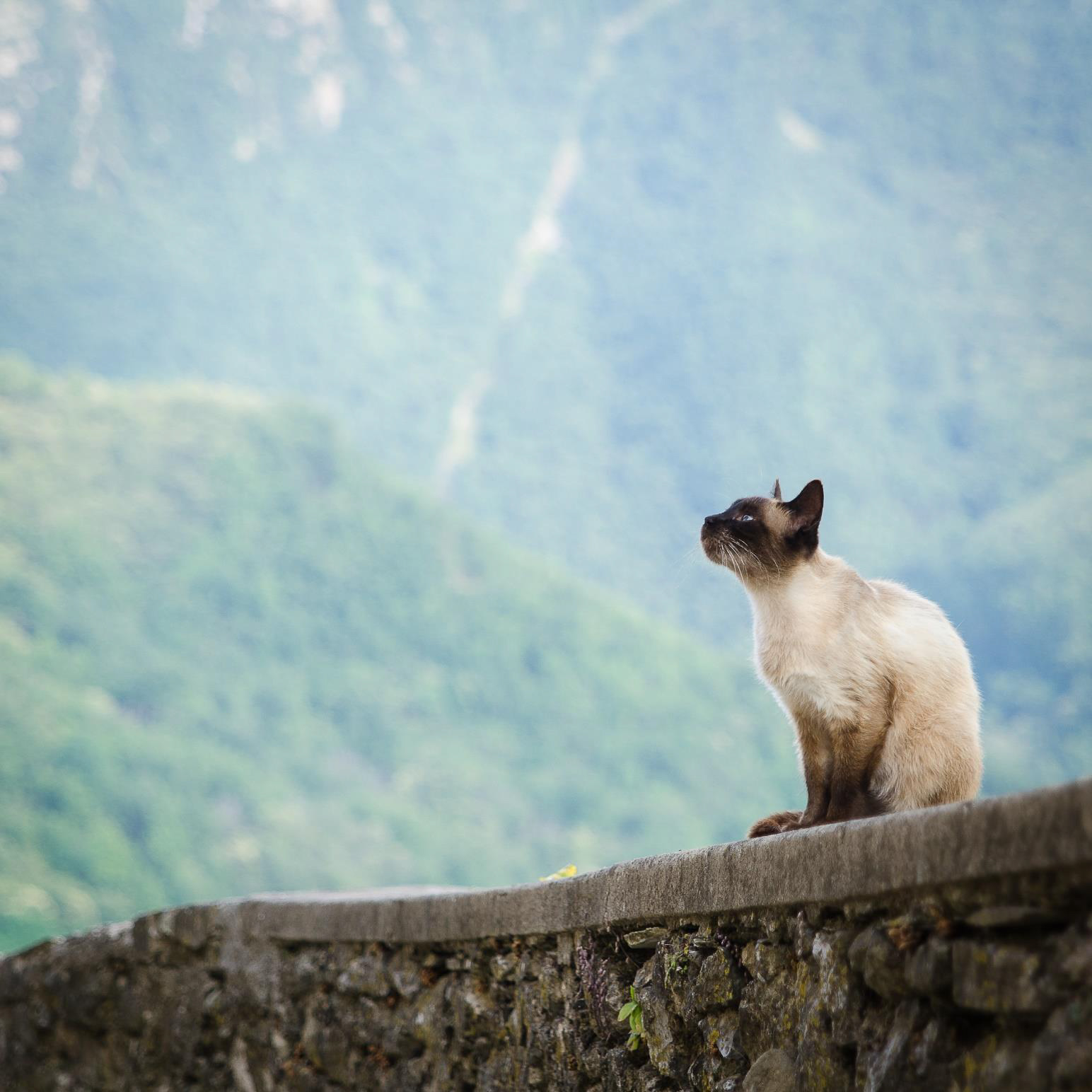Vegard Bergaplass, Horten: Cat in vico