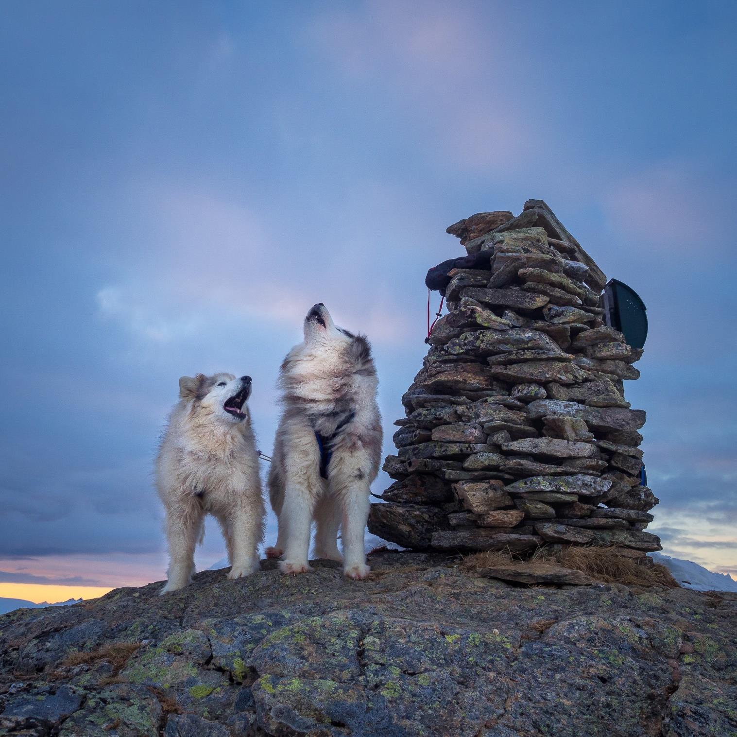 Veronika Sund, Harstad: Howling dogs